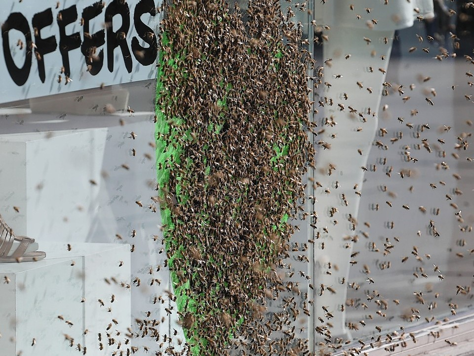 It is understood the unusual nesting place was picked by the Queen bee, who landed there first and was quickly followed by her devoted colony