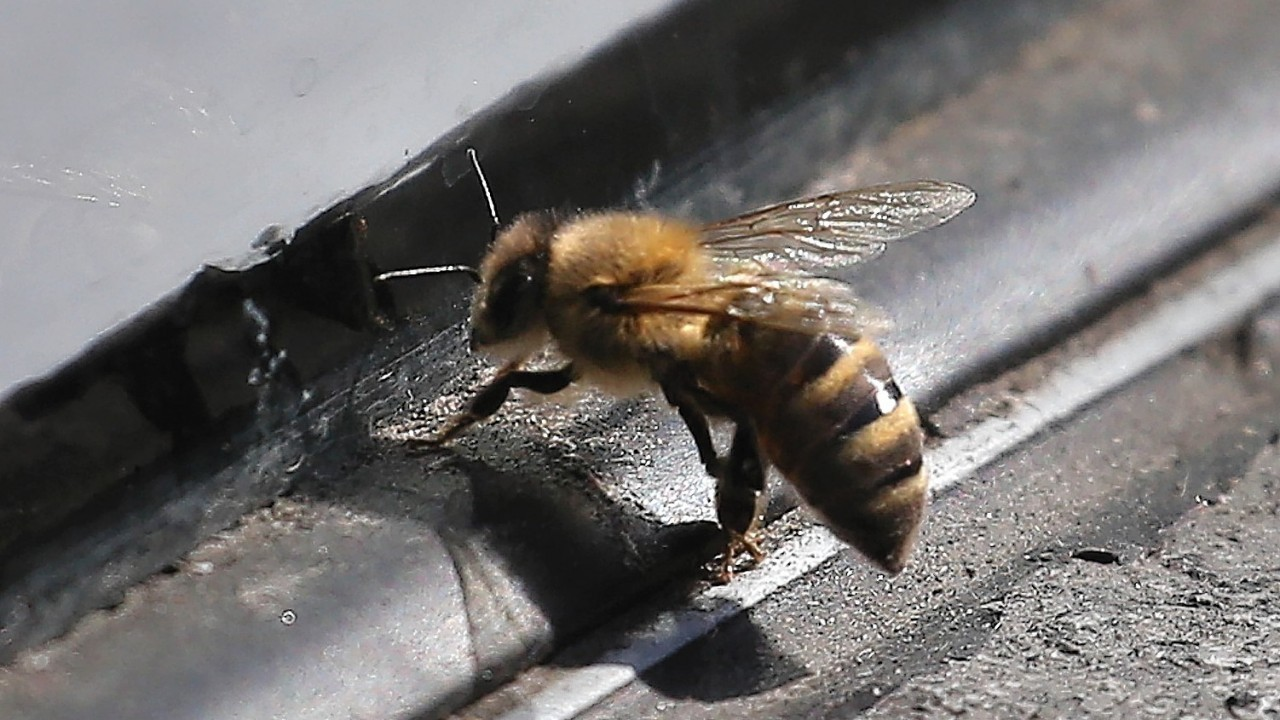 A hive of honeybees at Scaniport has been destroyed after an outbreak of the disease