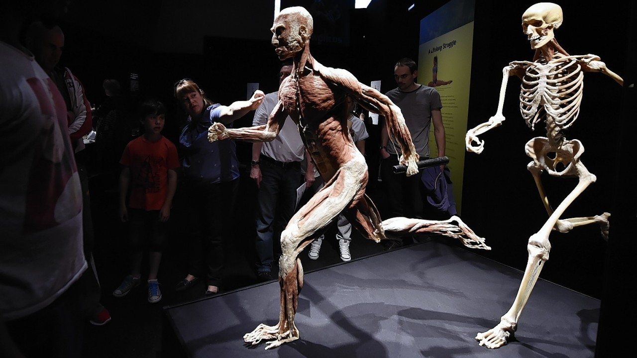 The Body Worlds Vital world-famous exhibition exploring the wonders of the human body, on show in the UK for the first time at the Centre for Life in Newcastle.
