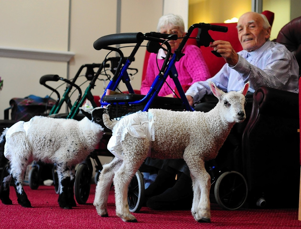 Newborn lambs Poppy and Lamby moved into the care home