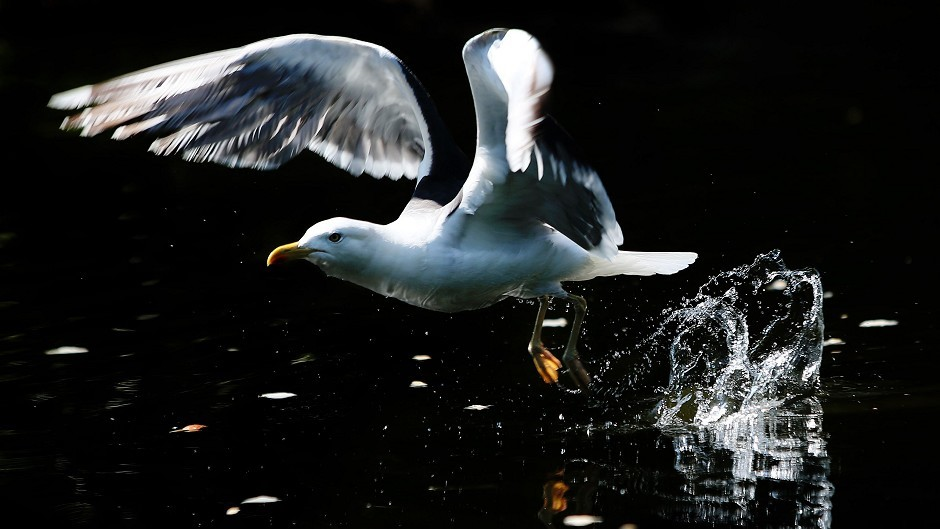 Problems with seagulls could become a thing of the past thanks to the handy new guide