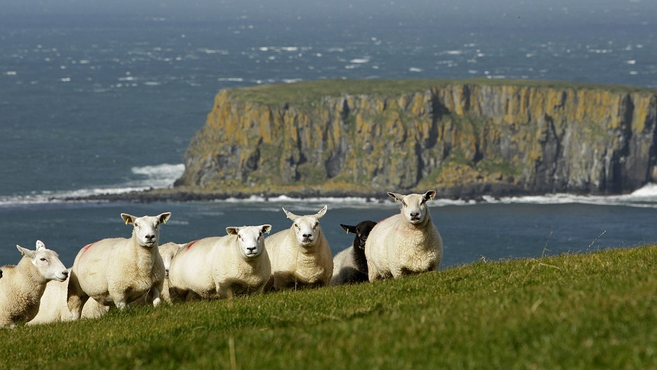 The food crime unit could trace the meat from stolen sheep