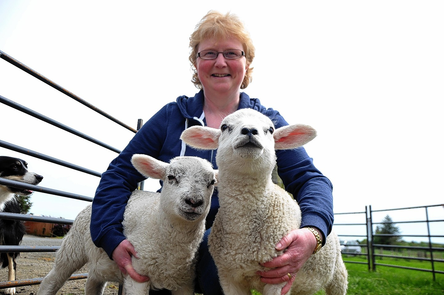 Loraine Allan reunited with her stolen lambs
