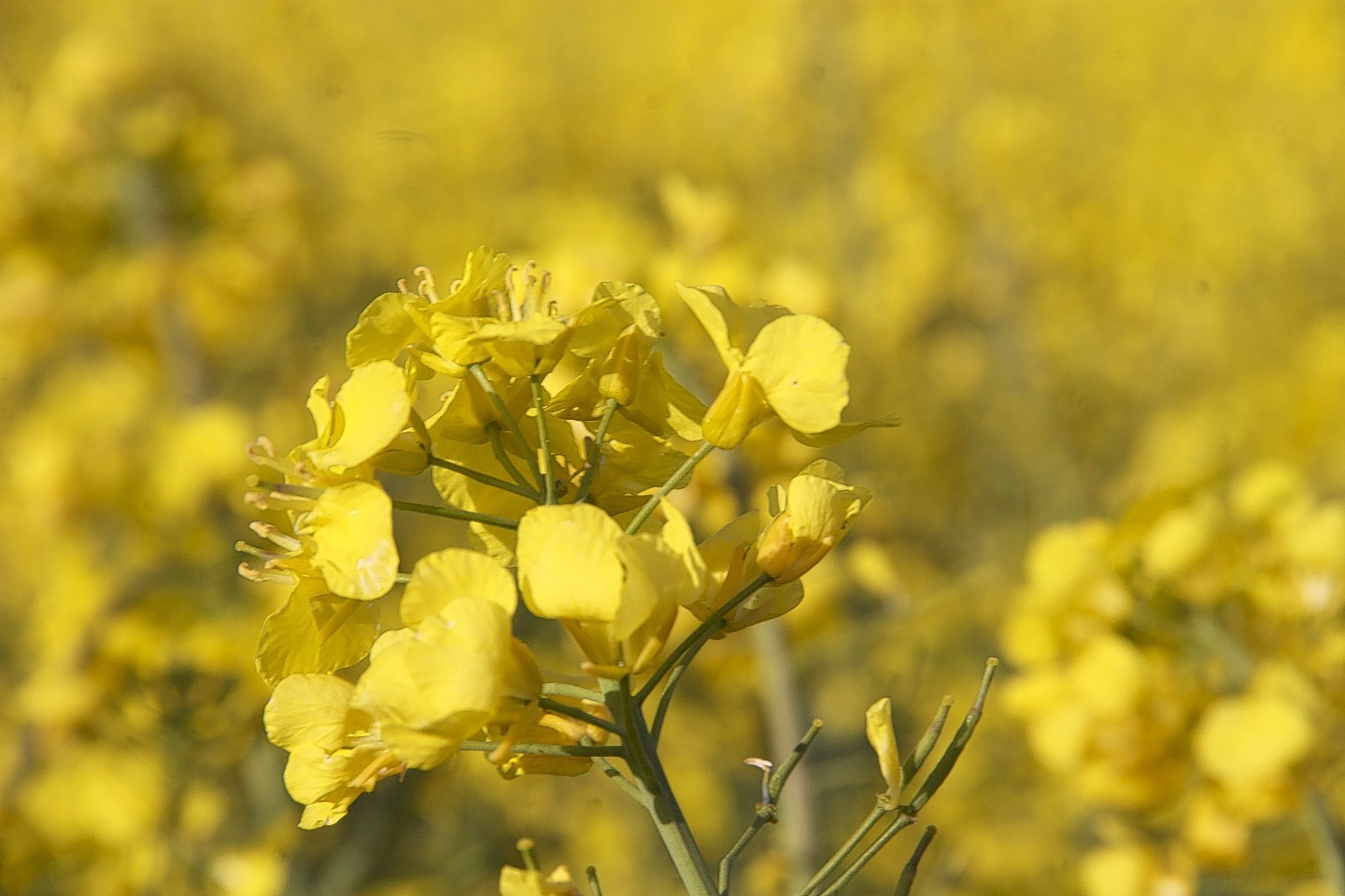 Neonicotinoid was used in seed dressing for oilseed rape
