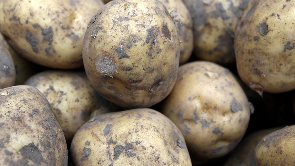 Total potato acreage is down 10%