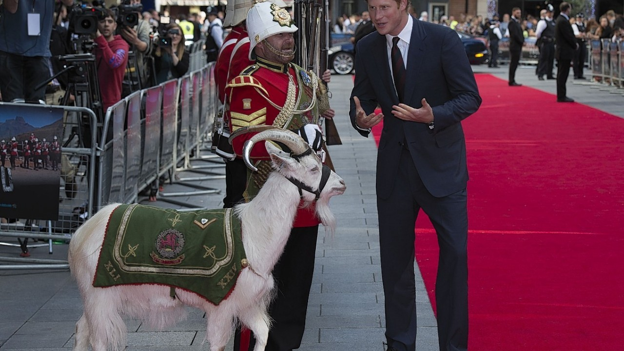 Prince Harry meets Sgt Jacko Jackson, Goat Major, with Shenkin, the regimental mascot of the 3rd Battalion, as he attends the 50th anniversary screening of Zulu at the Odeon in Leicester Square