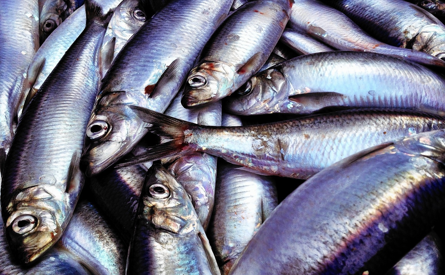 The row over herring catches goes on