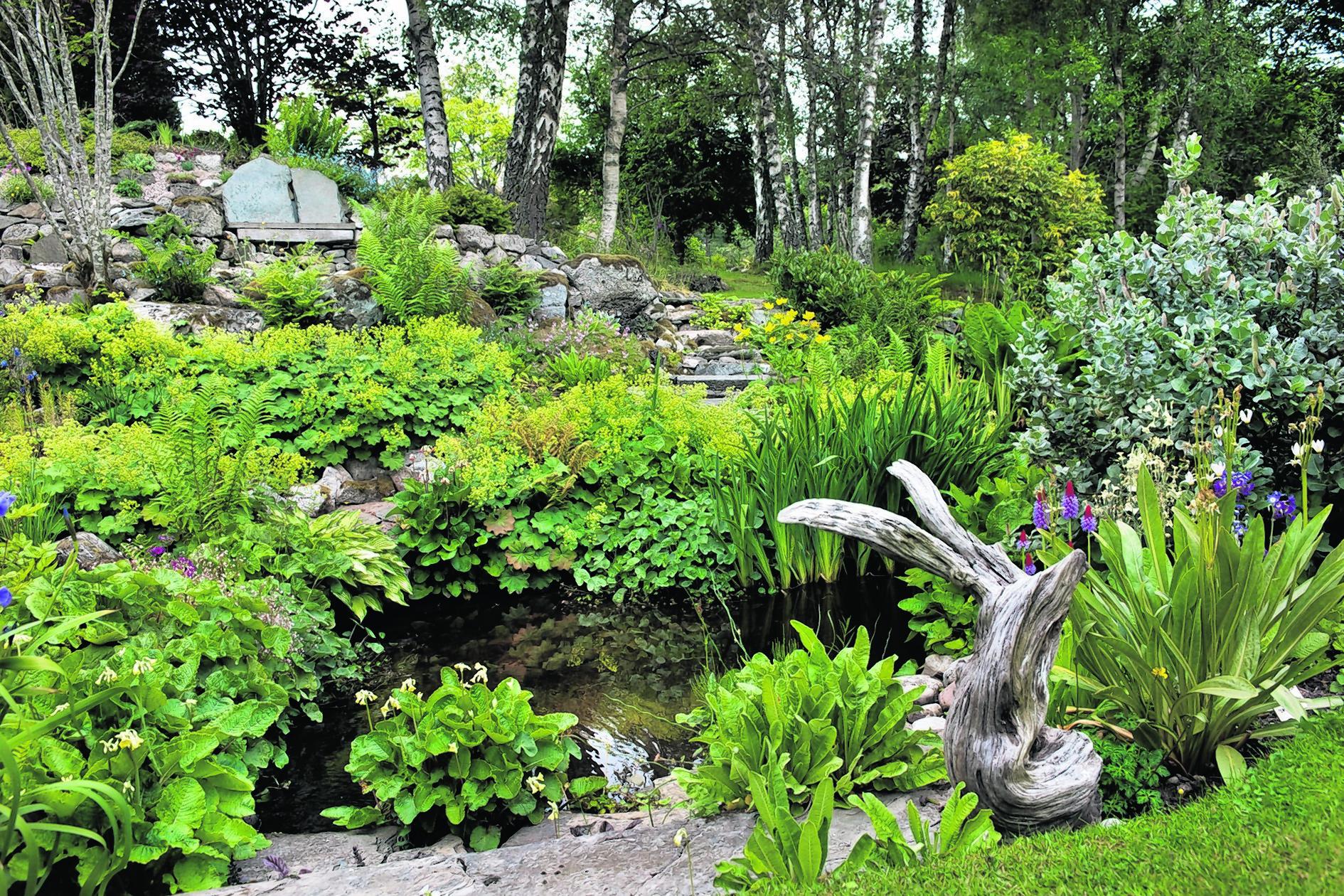 Pond in woodland garden with plants including Alchemilla mollis (lady's mantle), Lysichiton americanus (Skunk cabbage), Salix cv (willow), Primula cv and Iris cv