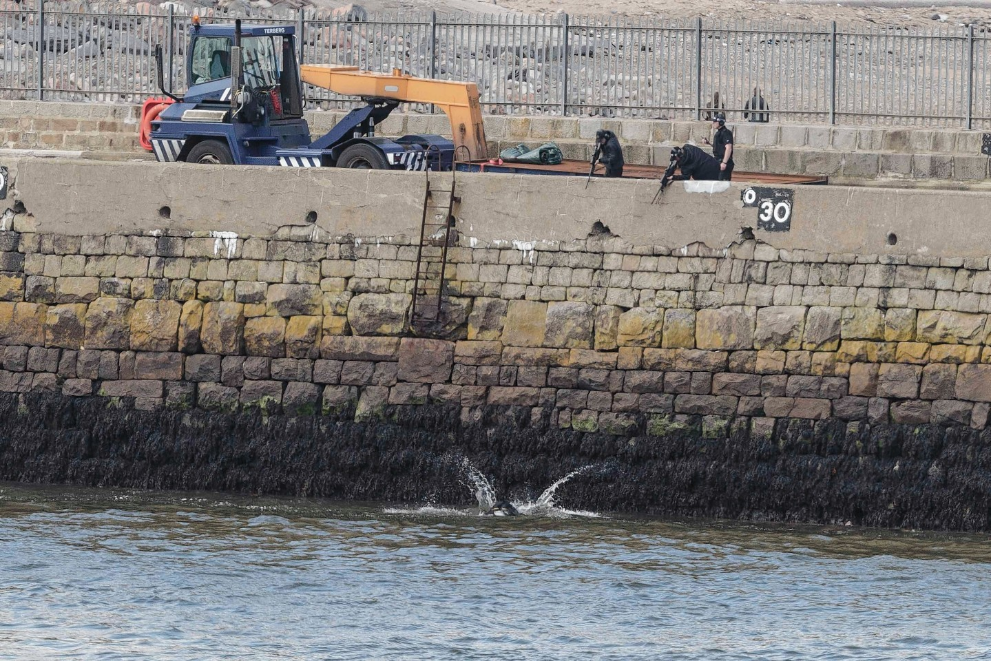 Police shot the cow at Aberdeen Harbour