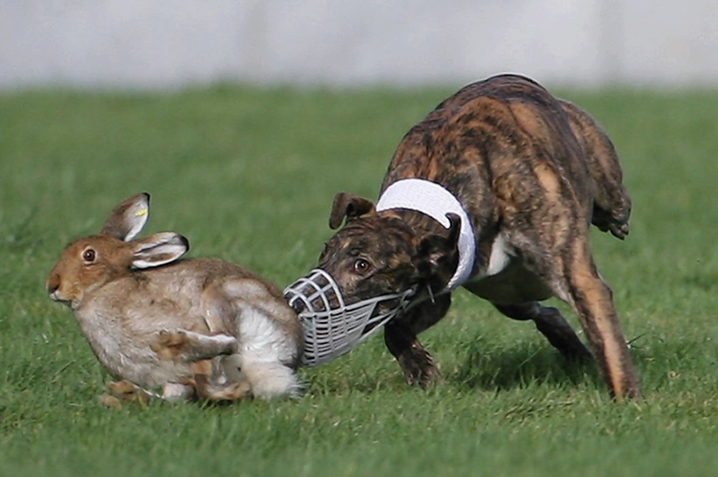 Hare coursing and poaching offences were highest in the north and north-east.