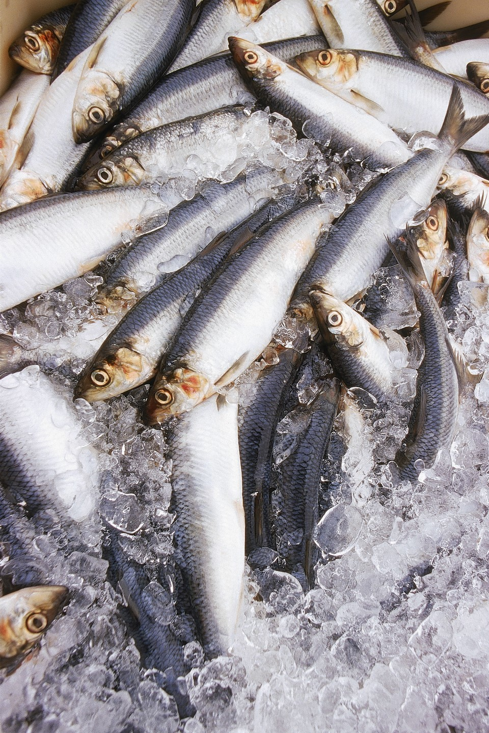 Herring is at the heart of the row over trade sanctions