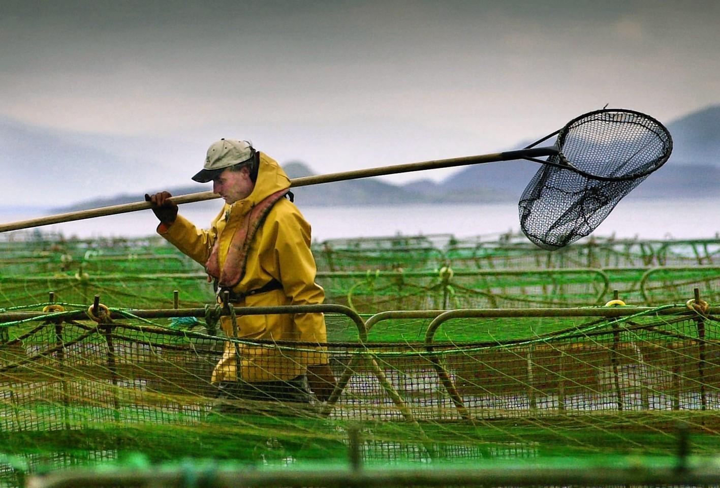 salmon-farming.jpg