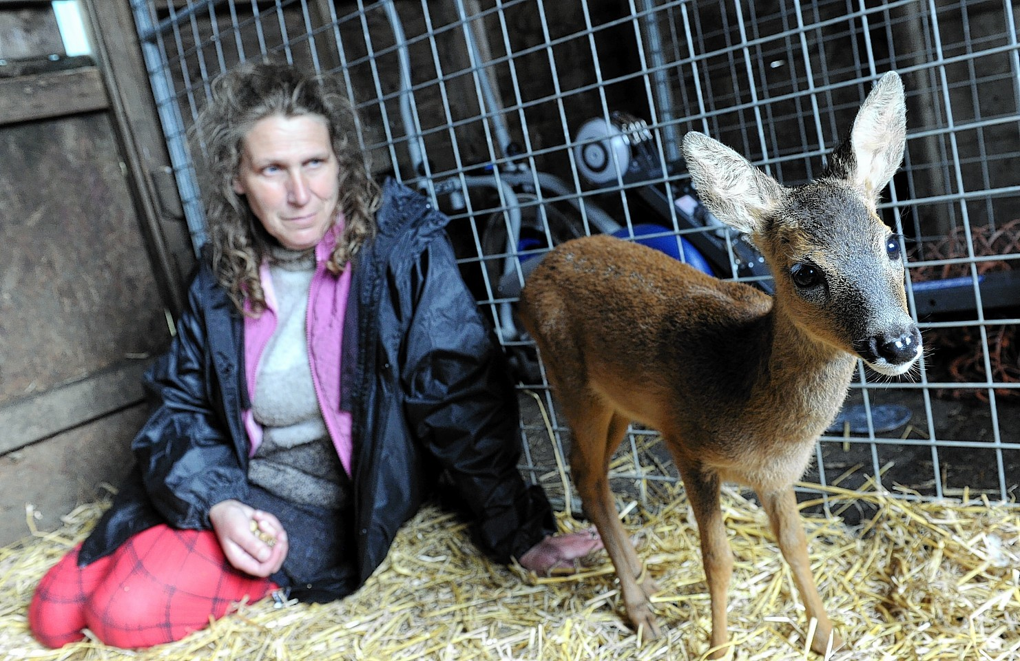 Pauline Murray with the rescued Roe Deer
