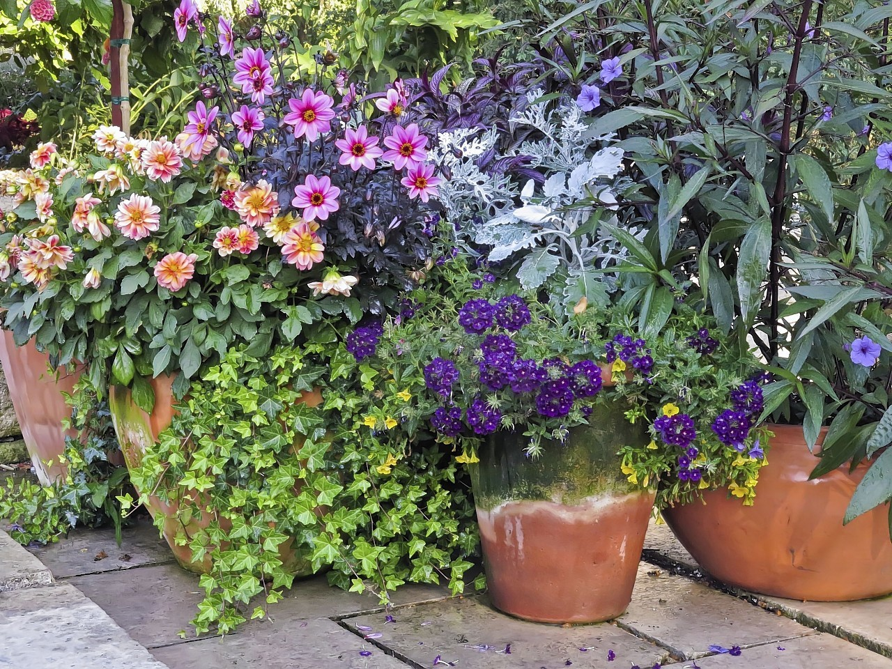 Perk Up Your Pots For Autumn