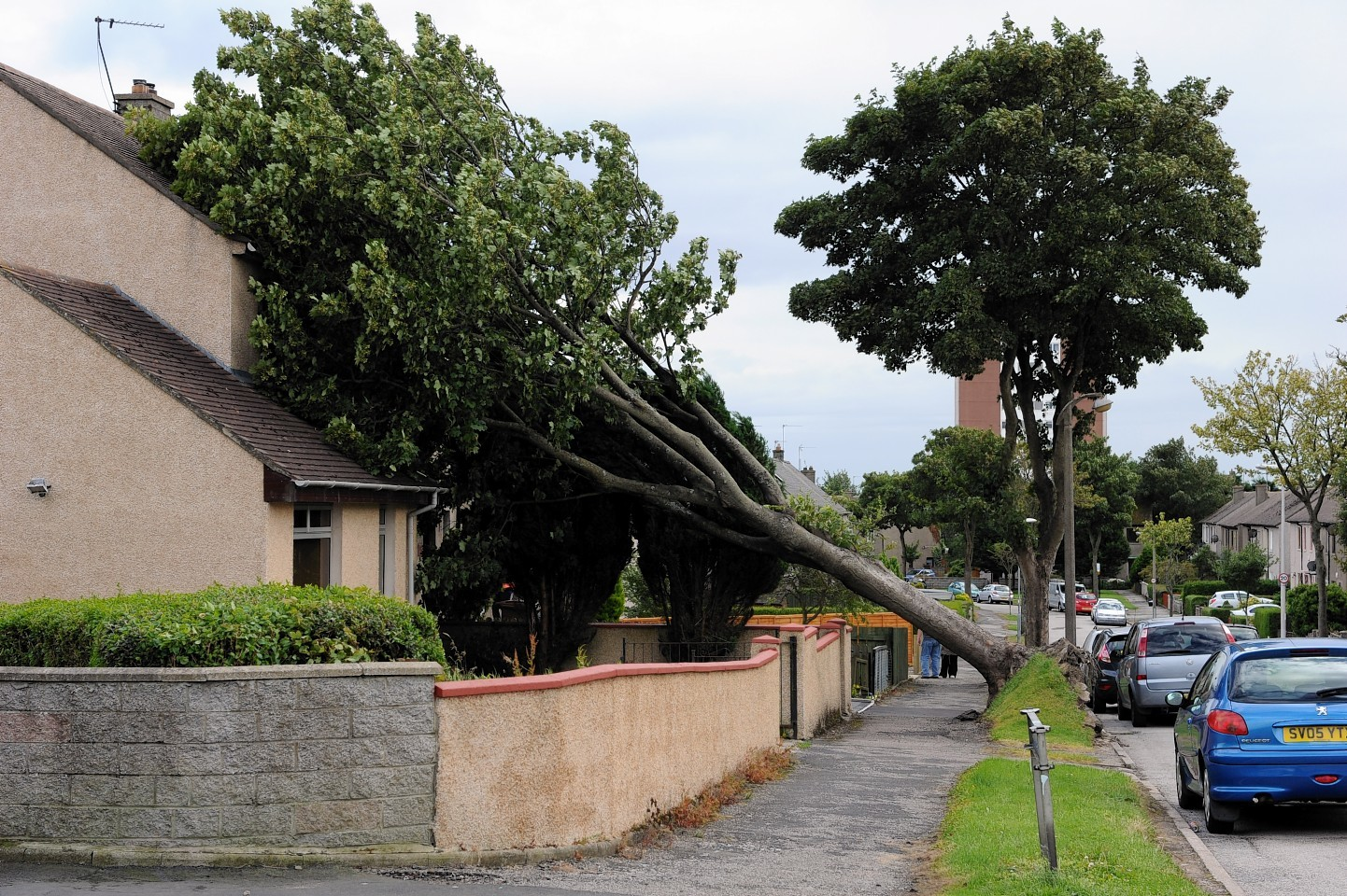 A tree fell onto a woman's house in Mastrick, Aberdeen