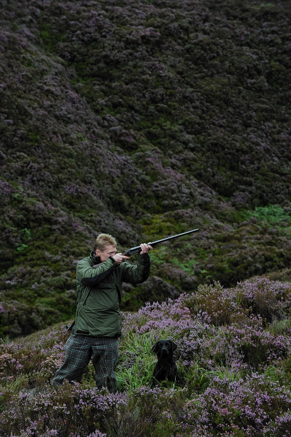 Grouse shooting in the Highlands