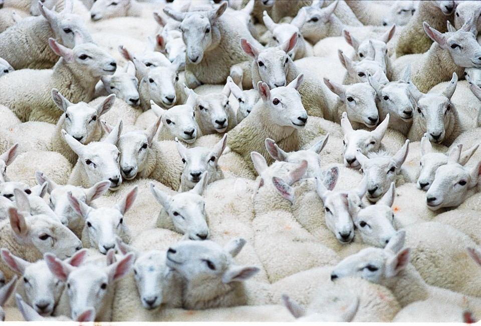 The scheme will initially apply to sheep.