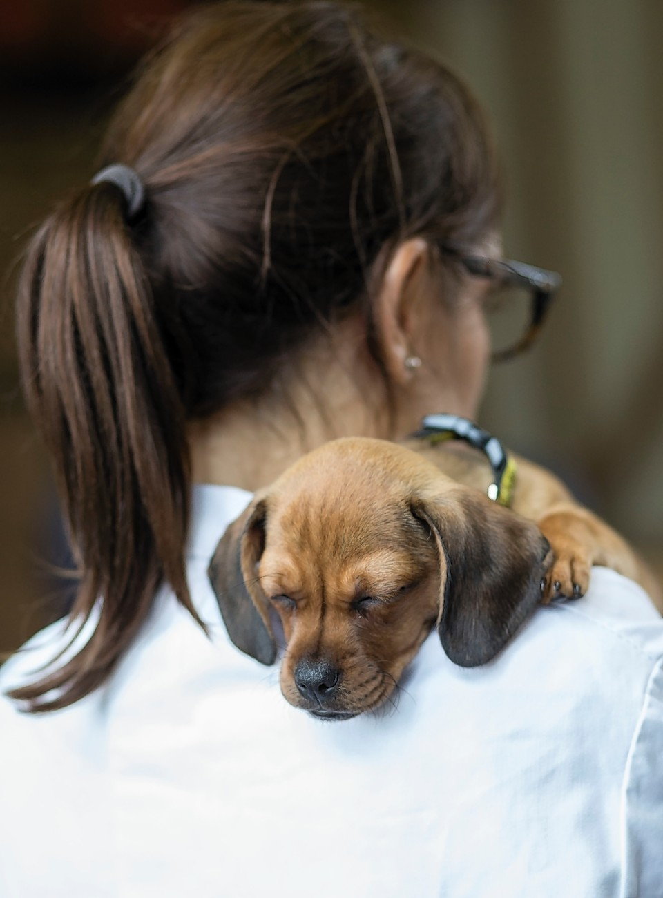 Many pet owners underestimate veterinary treatment costs