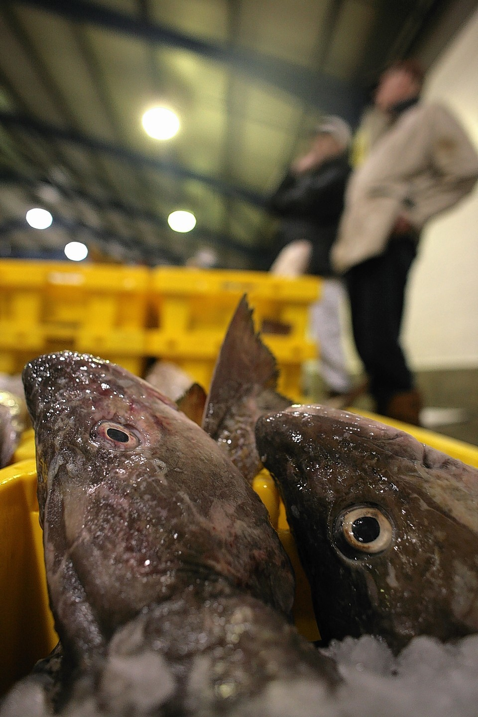 Worrying times for Scotland's fishing fleet