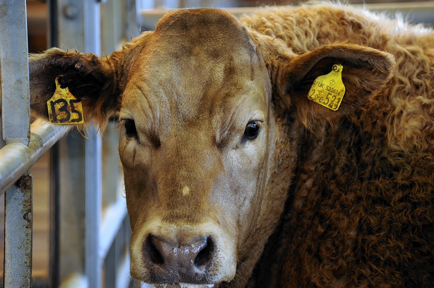 Farmers are being advised on how best to select, purchase and look after the bulls.