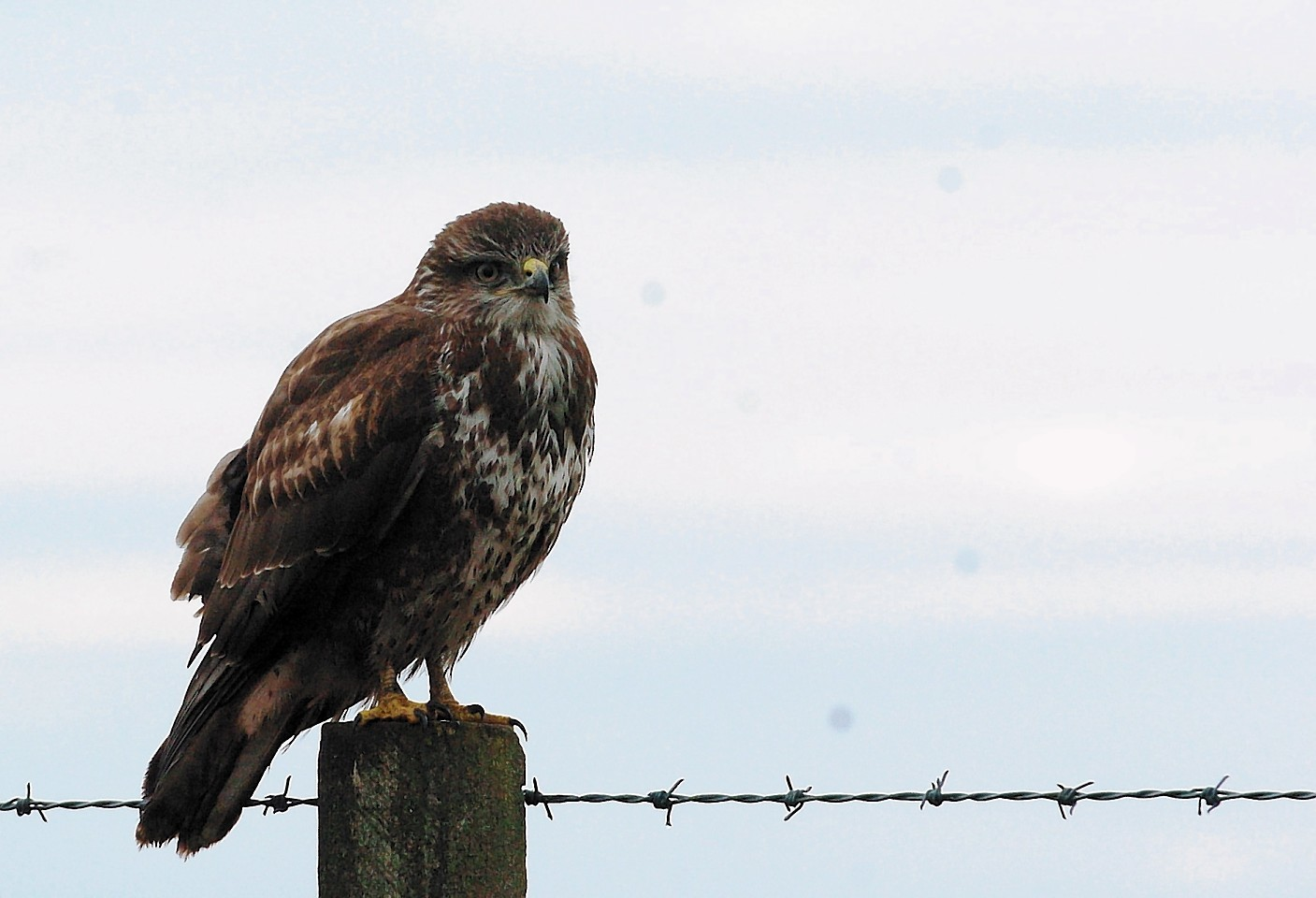 It is believed the bird could be a buzzard