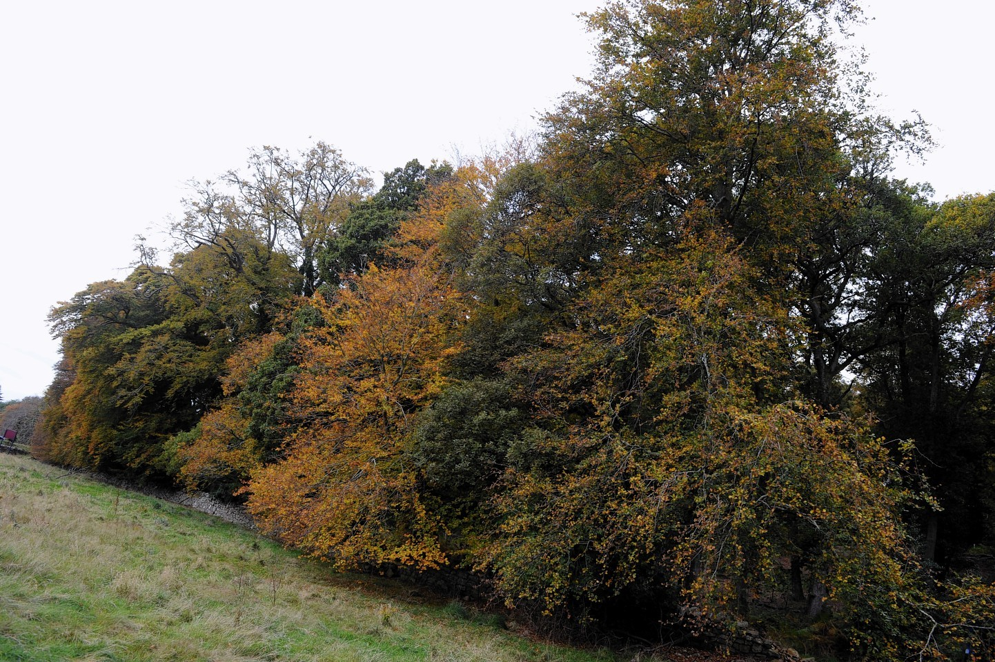 Trees are to be felled at Oakwood in Elgin