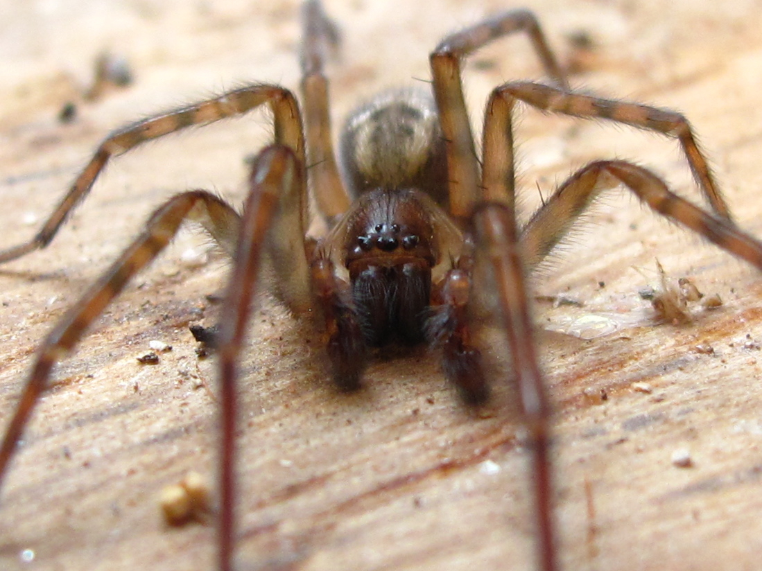 Spiders are prominent around the home at this time of year