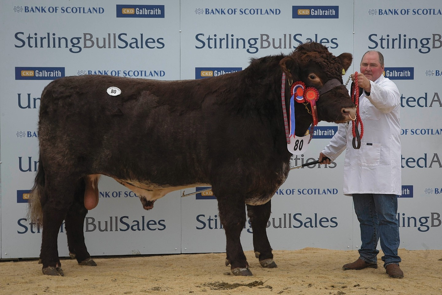 The Shorthorn champion