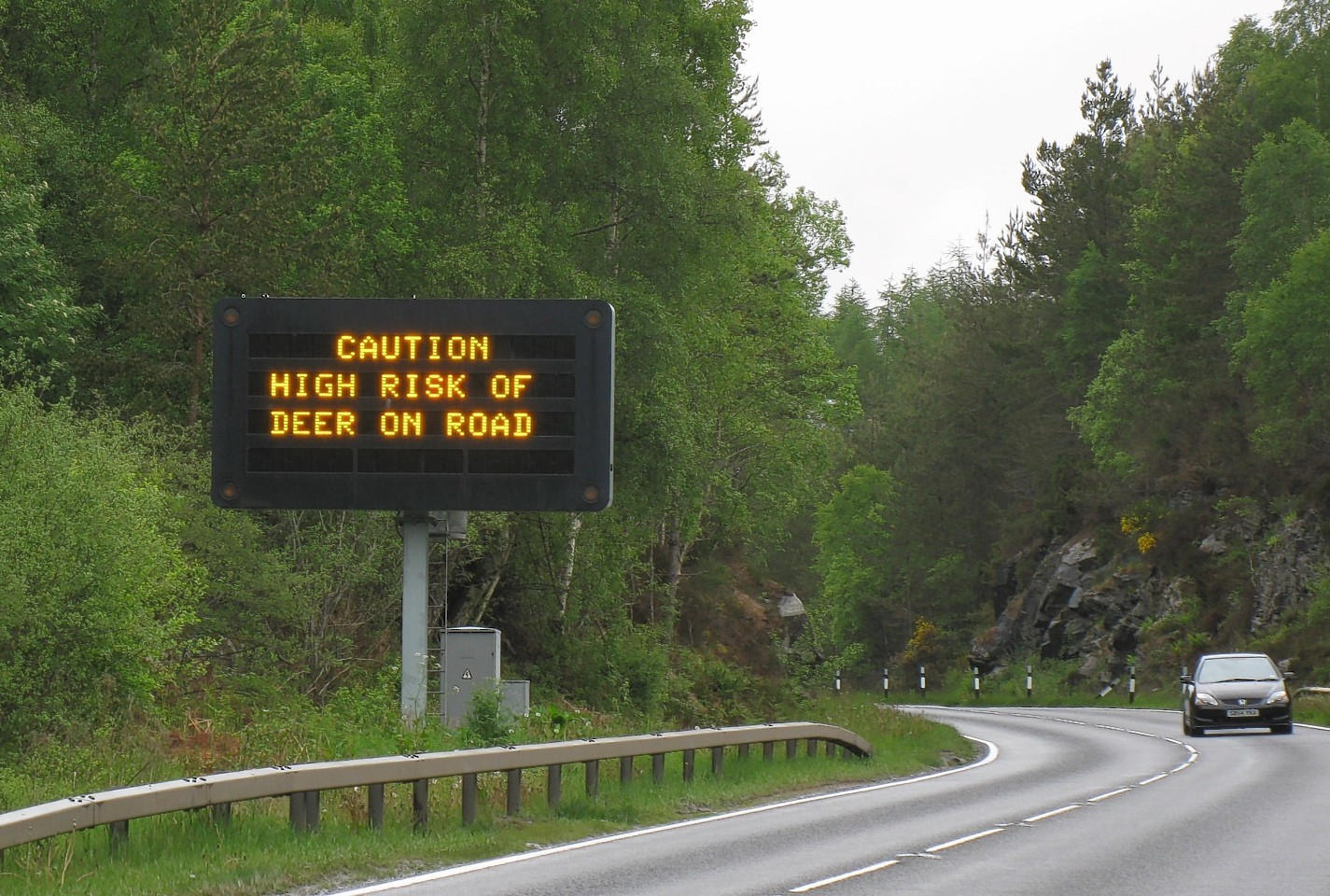 Warning of deer on trunk roads this Autumn