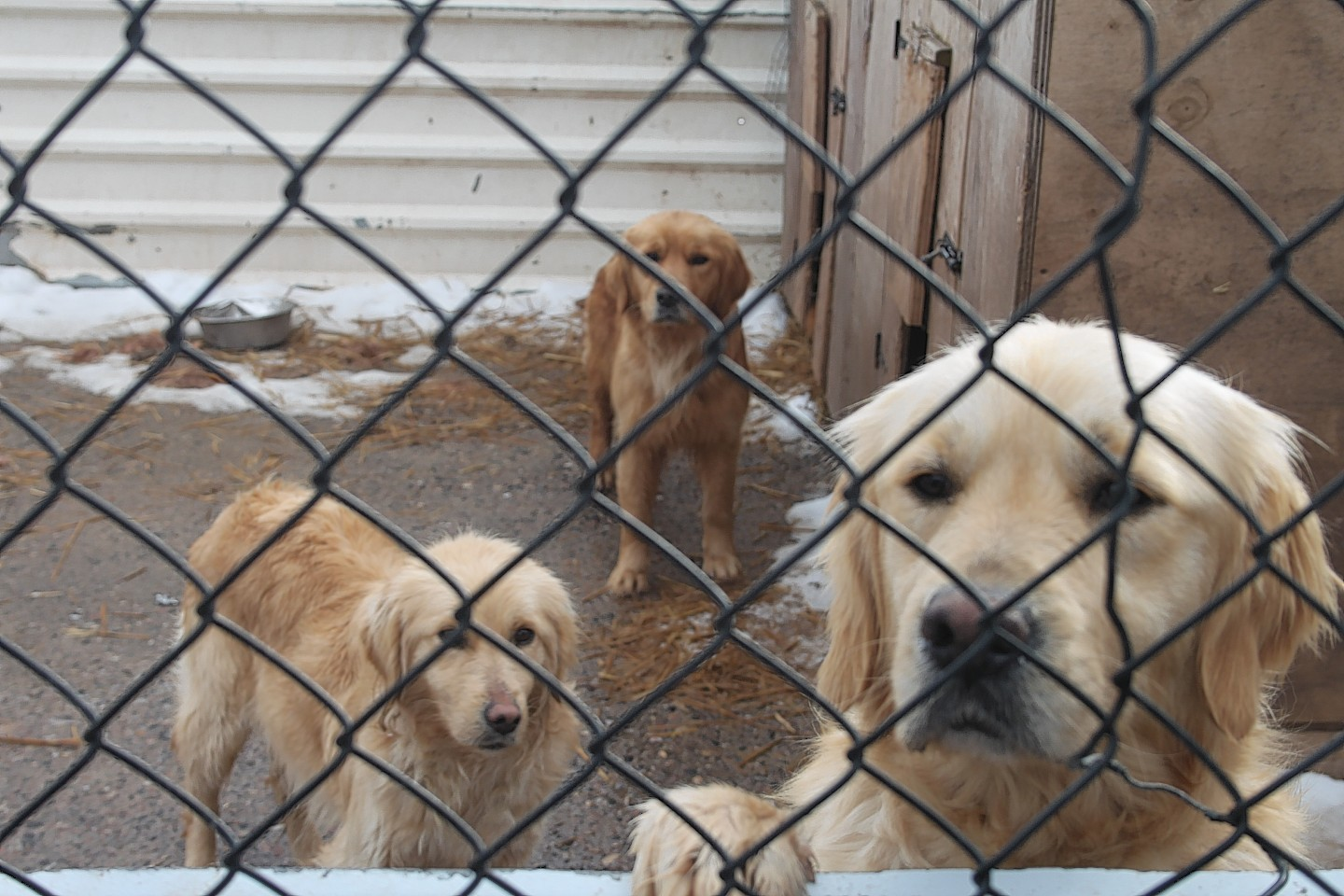 Three of the dogs kept in the cruel conditions