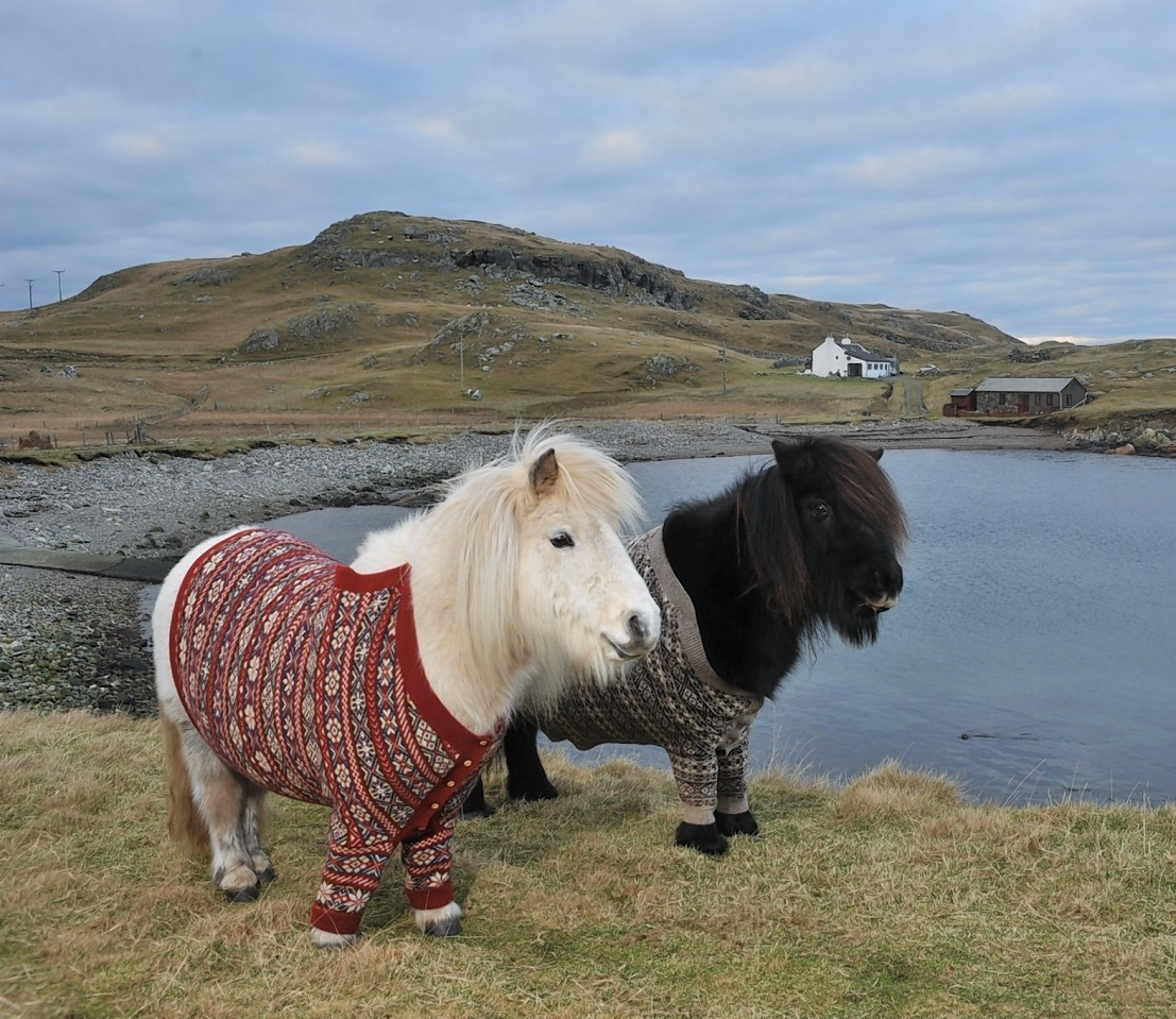The VisitScotland game will teach youngsters about a variety of animals