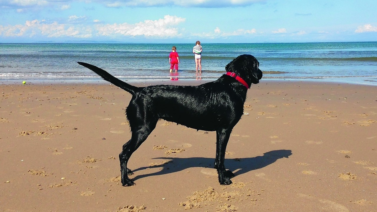 Labrador Bella lives with the Hey family in Nairn.