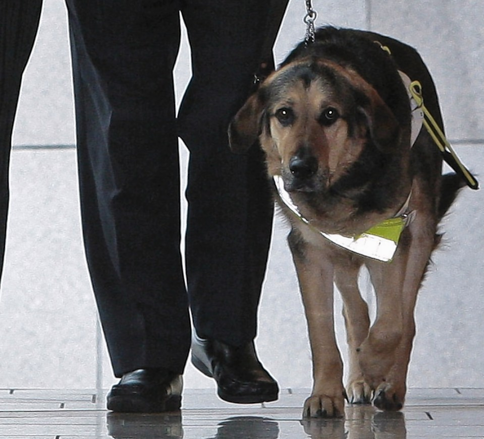 Dogs like MSP Dennis Robertson's guide dog, Mr Q, deserve a loving home all year round, not just for Christmas.