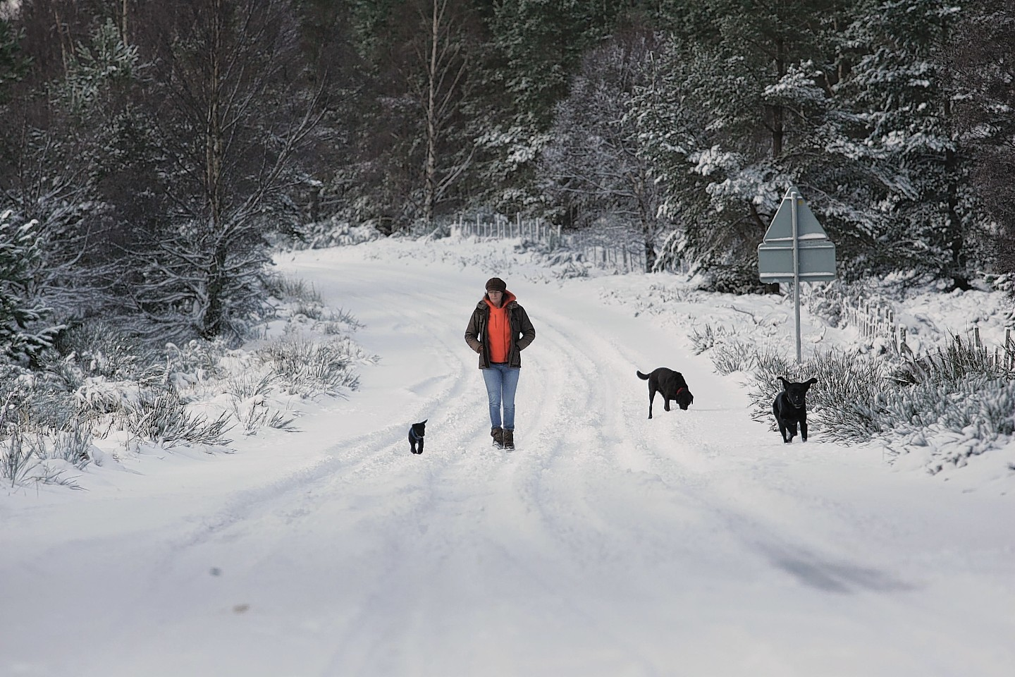 A woman walks her dogs in the snow