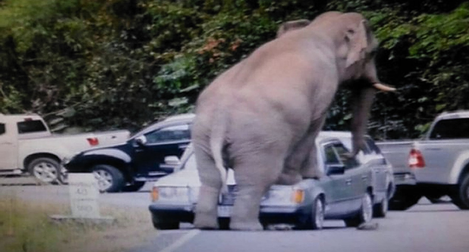 Video Terrifying Footage Of Elephant Crushing Car In Thai
