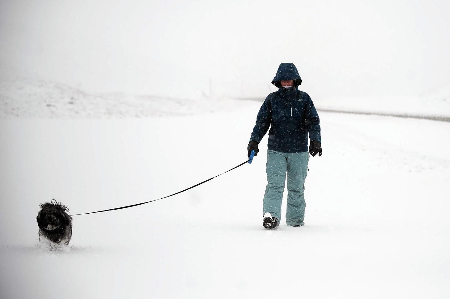A child walks his dog at Glenshee