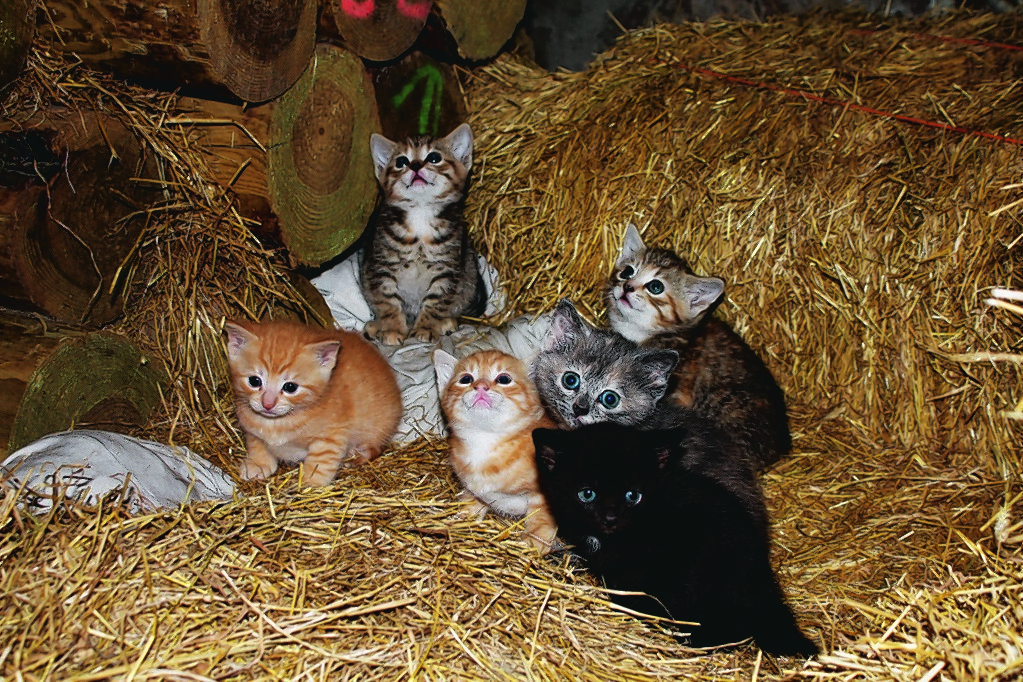 These cute kittens are the newest addition to the McNeill family from  Newfield Auchleuchries, Aberdeenshire.