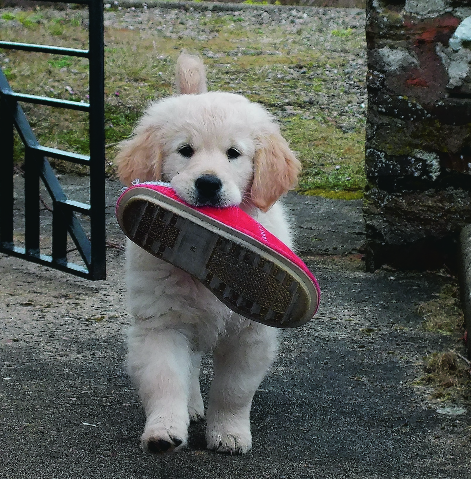 This is Harvey who lives with Sarah Sutherland in Ulbster, by Lybster, Caithness. Harvey is our winner this week.