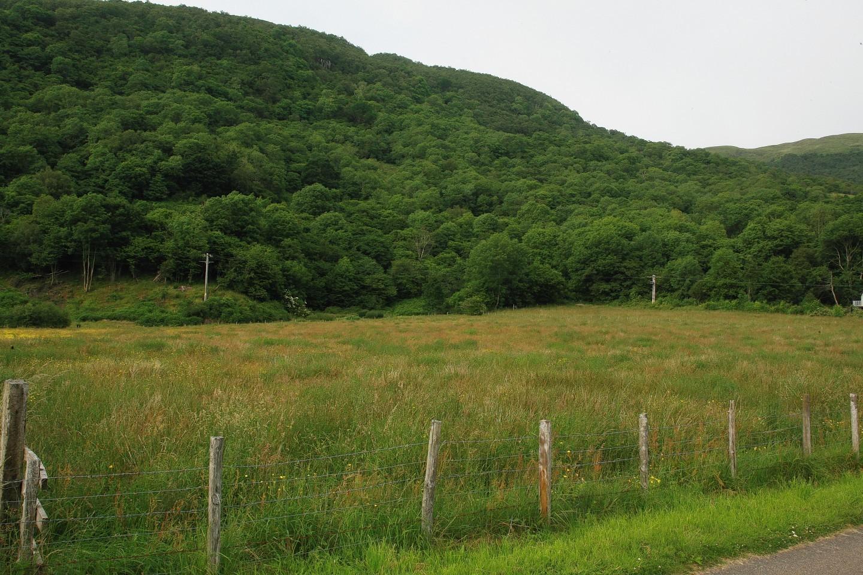 Woodland on a croft