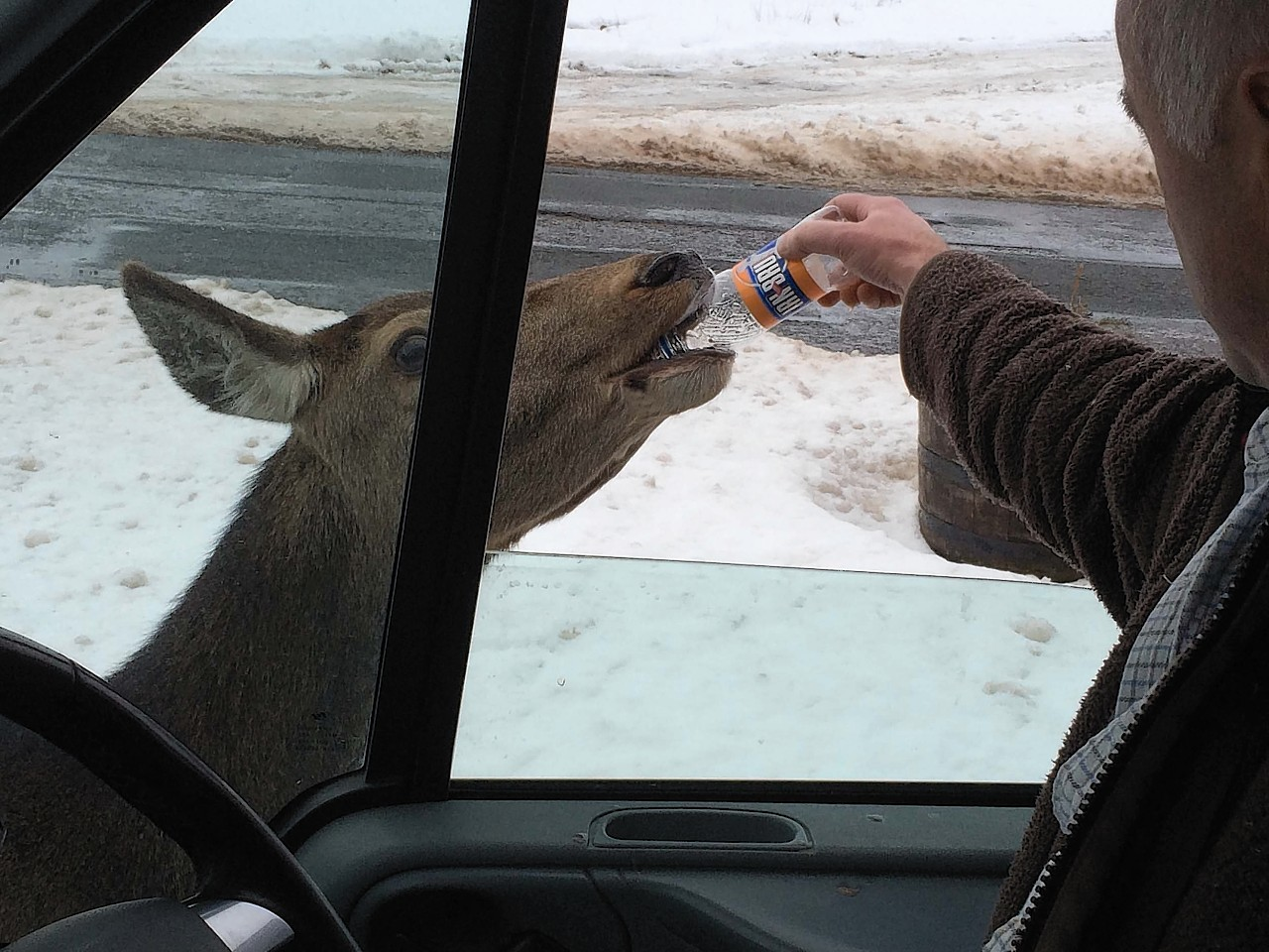 The deer polished off the cheese and onion crisps before enjoying a bottle of Irn Bru