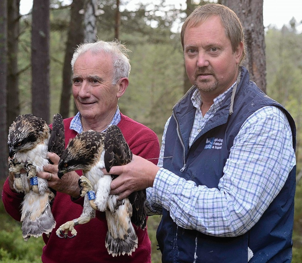 Osprey expert Roy Dennis and RSPB Loch Garten Reserve manager Richard Thaxton with Millicent and Seasca shortly after the birds were tagged in 2014