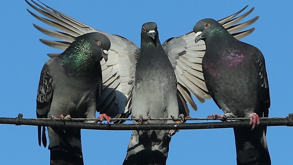 Aberdeen City Council has been urged to sell off a string of vacant pigeon lofts to reduce the council tax burden.
