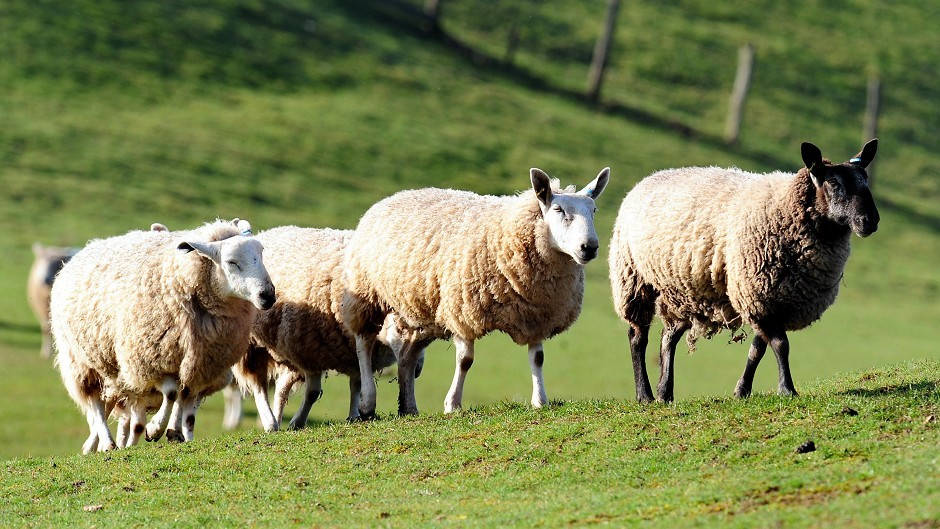 Train between Inverness and Edinburgh cancelled because of sheep on the line | Press and Journal