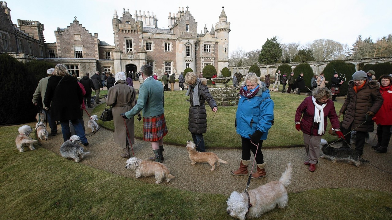 75 breed dedicated enthusiasts from eight different countries parade 50 rare and endangered Dandie Dinmont Terriers as they visit Sir Walter Scott's home in Abbotsford, Melrose