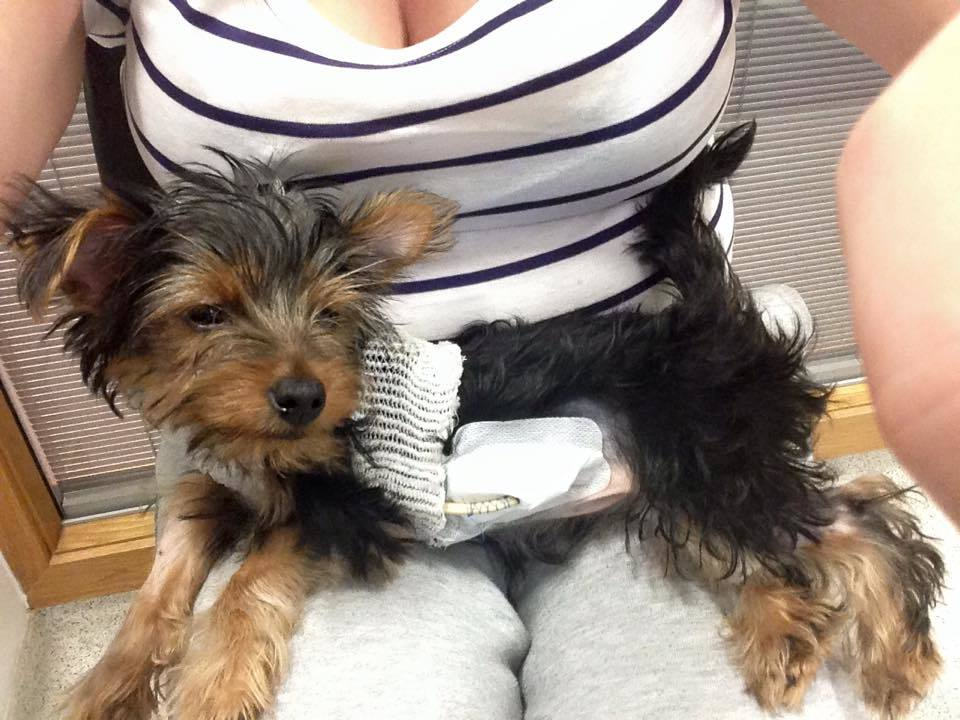 Injured puppy Kai is at Glasgow's animal hospital