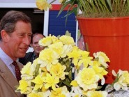 The Prince of Wales has a fondness for daffodils