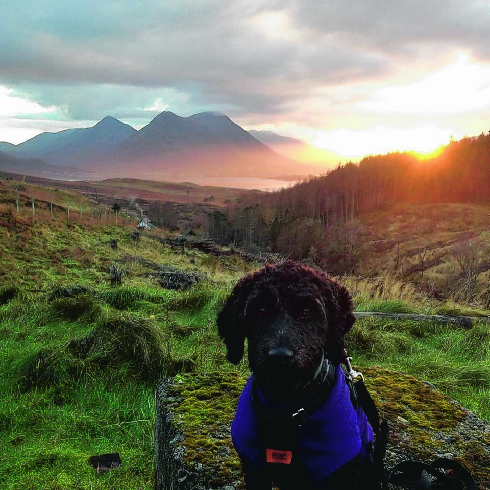 This is Saba, a young Cockapoo from the island of Raasay. Seen here resting after her favourite walk with her owner Fiona Gillies, along a local forestry track called The Burma Road with sunset over the Cullins on the Isle of Skye behind her. Saba is our winner this week.