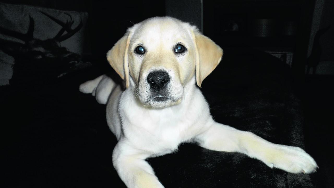 This is Rowan, the newest member of the Walker family in Braemar.