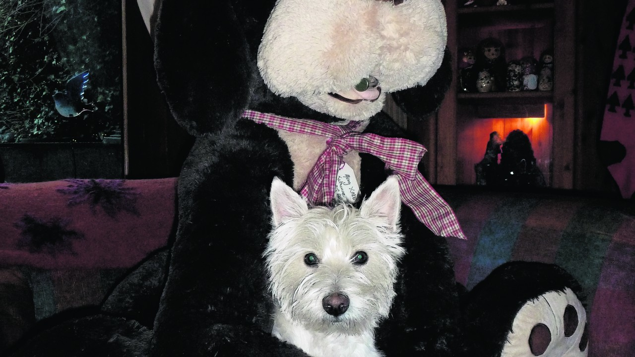 Here is Dolly with her pal Big Dog visiting Jean & Duncan on Christmas day in Lossiemouth.