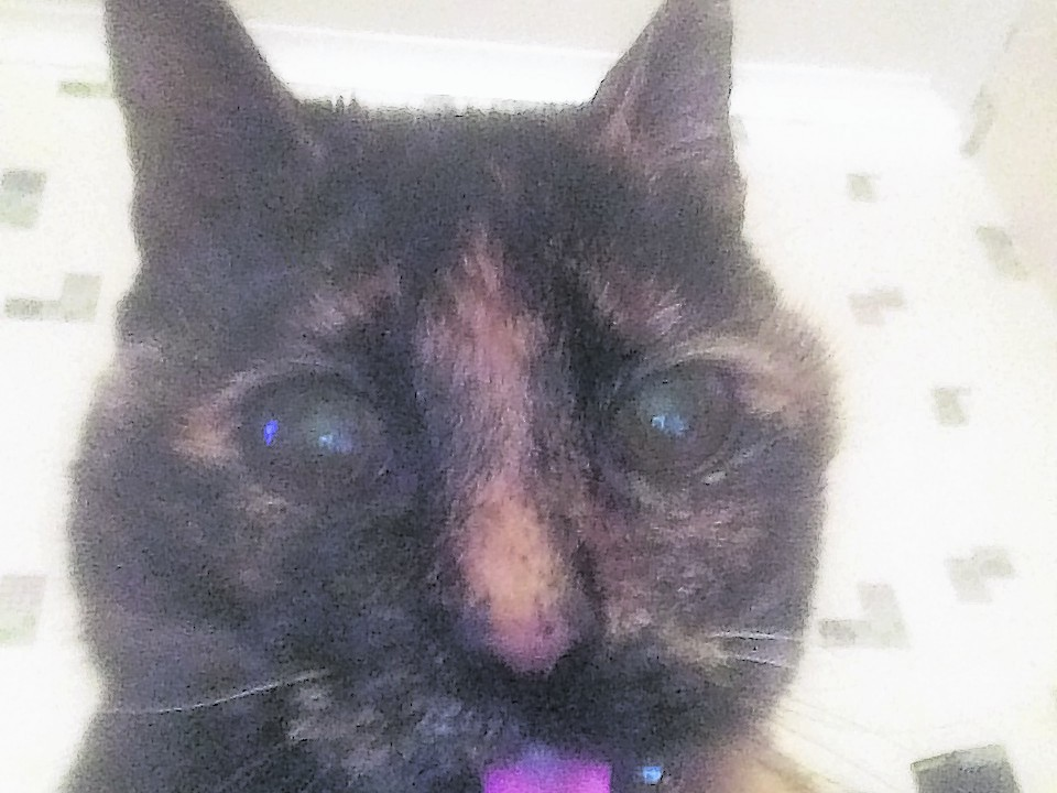 Mollie the 17 year old tortoiseshell cat lives in Macduff with the McNeils.